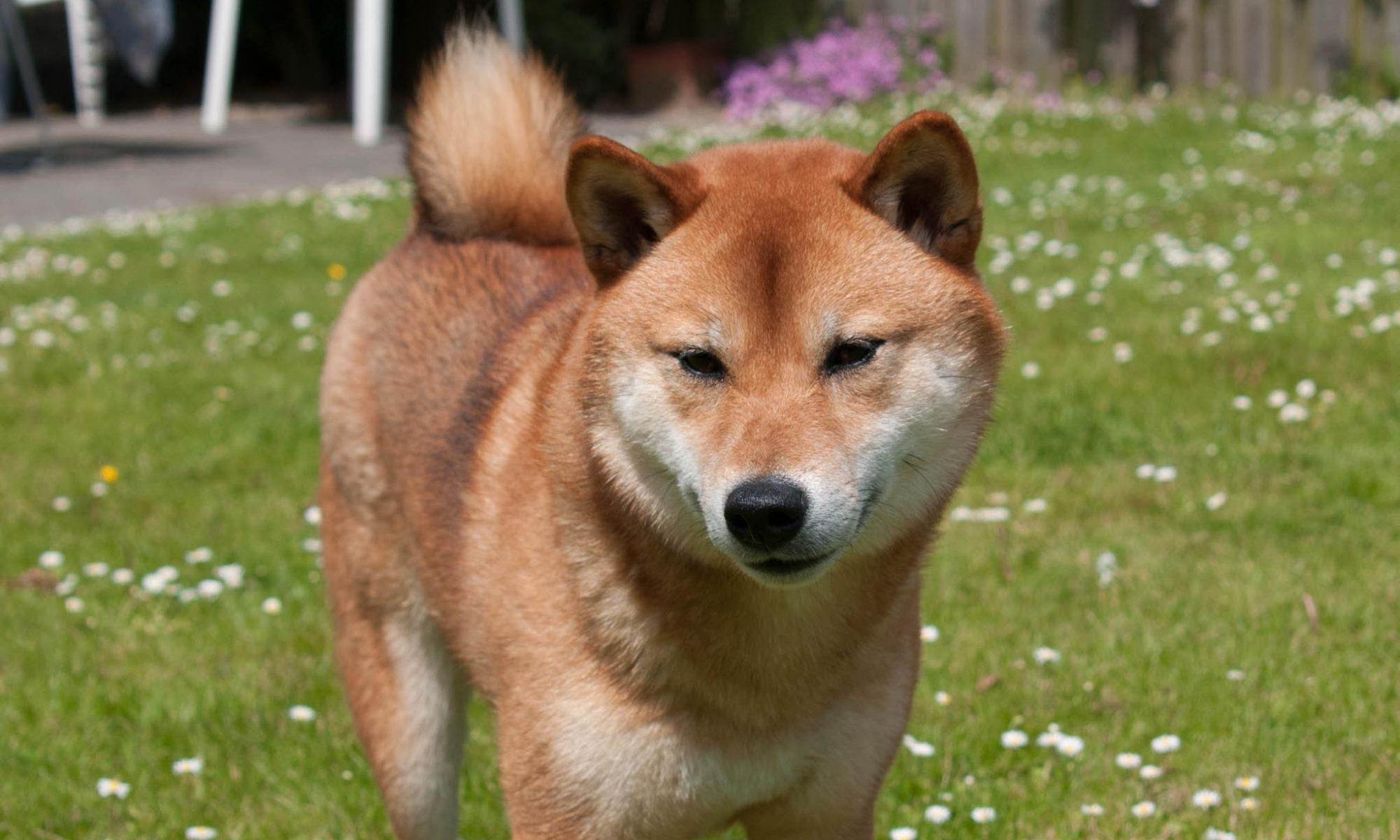 ZfTT Zentrum für Tiertherapeuten® Ausbildung zum amtstierärztlich geprüften Hundetrainer, Hundeverhaltensberater, Seminare für Tierhalter