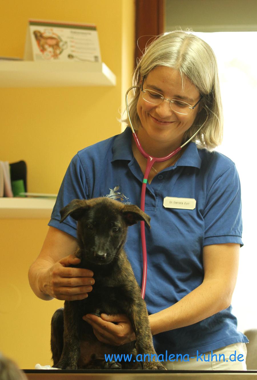 Dozententeam zftt zentrum f r tiertherapeuten for Ausbildung zum innendekorateur